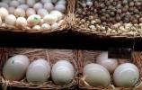 Egzotinių kiaušinių verslas